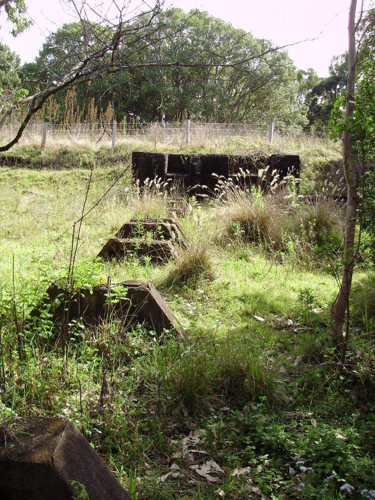 Lahey's Canungra Sawmill