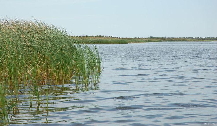 Lake Chervonoye wwwfotobelbyimagesozyoraozerochervonoe4jpg