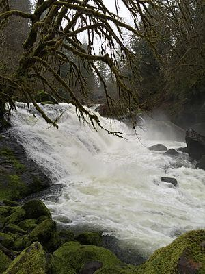 Lake Creek (Siuslaw River) httpsuploadwikimediaorgwikipediacommonsthu