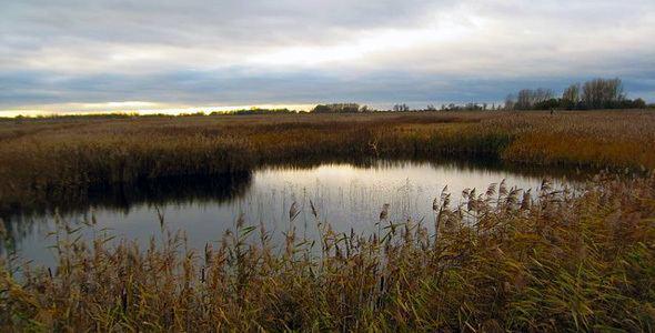 Lakenheath Fen RSPB reserve Lakenheath Fen RSPB Nature Reserve Information