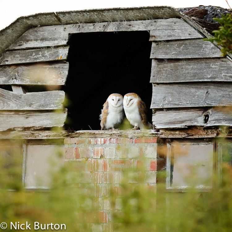 Lakenheath Fen RSPB reserve Nick Burton39s Wildlife Photography RSPB Lakenheath Fen