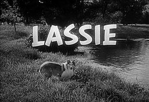 Lassie (1954 TV series) Lassie 1954 TV series Wikipedia