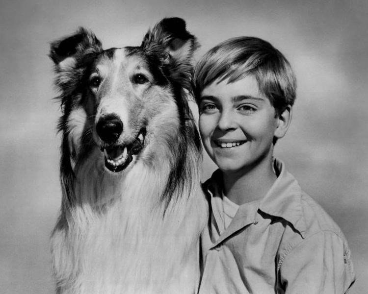 Lassie (1954 TV series) 1000 images about Lassie Come Home on Pinterest Donald o39connor