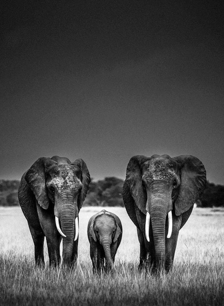Laurent Baheux Wild Africa The beautiful animal photographs by Laurent Baheux