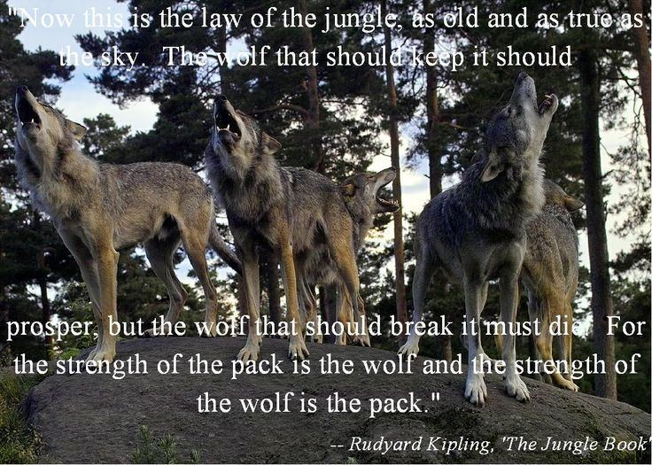 Law of the Wolf THE LAW OF THE WOLFSHOULD BE THE LAW OF THE PEOPLE Wordy