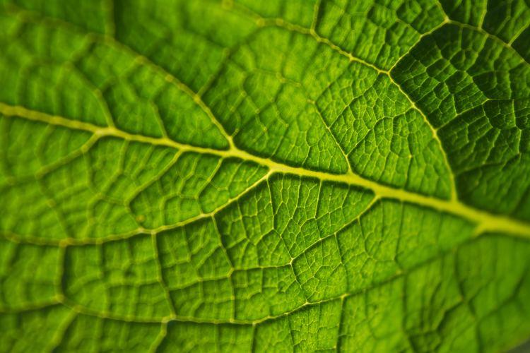 Leaf 771 Leaf Pictures Free HD Stock Photos Unsplash
