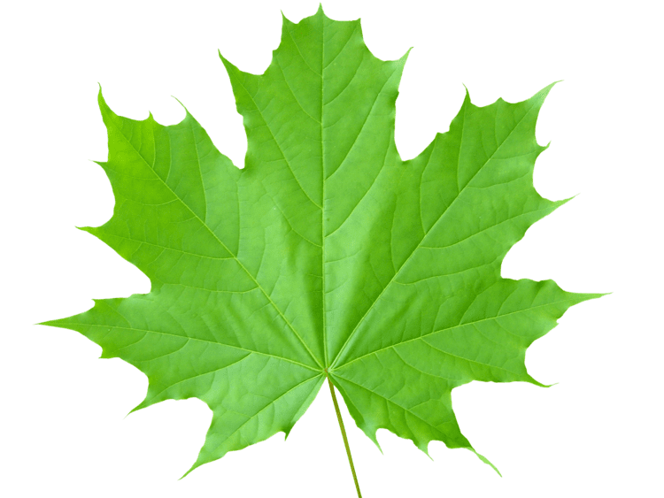 Leaf Green leaves PNG images free download pictures