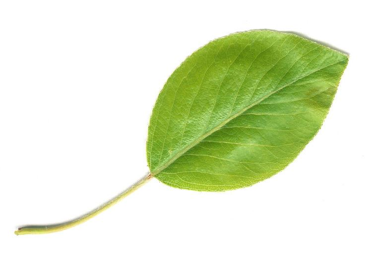 Leaf httpscamogithubusercontentcomaffdc25d689f70e