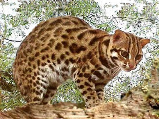 Leopard cat httpssmediacacheak0pinimgcomoriginals58