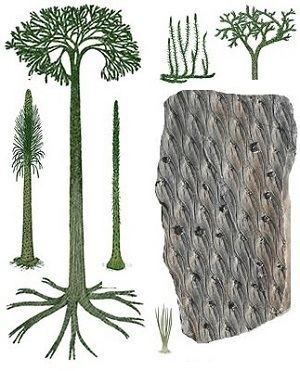 Lepidodendron Lepidodendron The Fossil Plant Genus Ayur Times