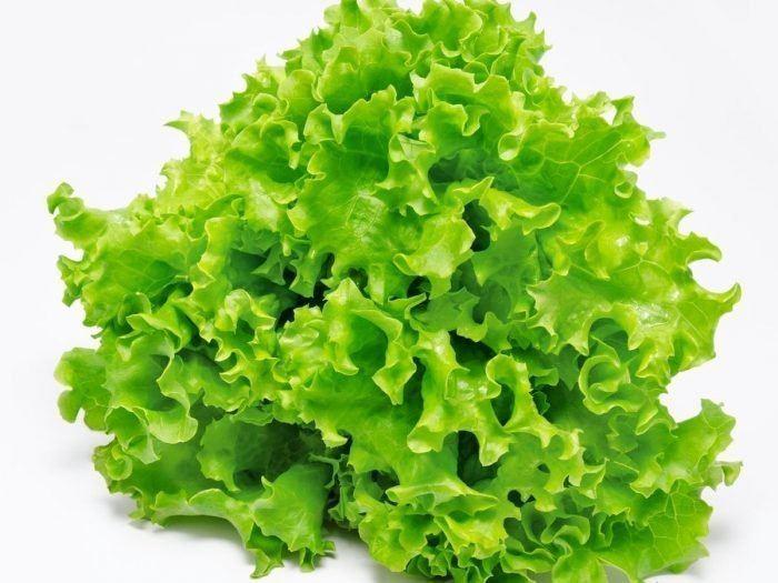 Lettuce 8 Impressive Benefits of Lettuce Organic Facts