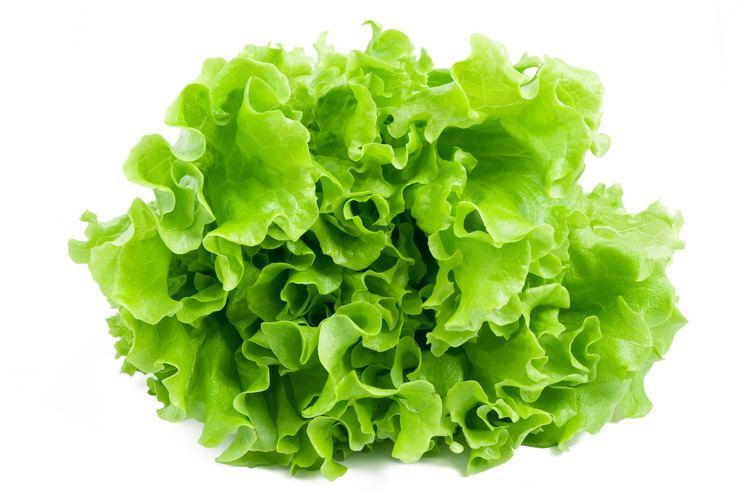 Lettuce Move over lettuce The Muslim Observer