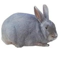 Lilac rabbit - Alchetron, The Free Social Encyclopedia