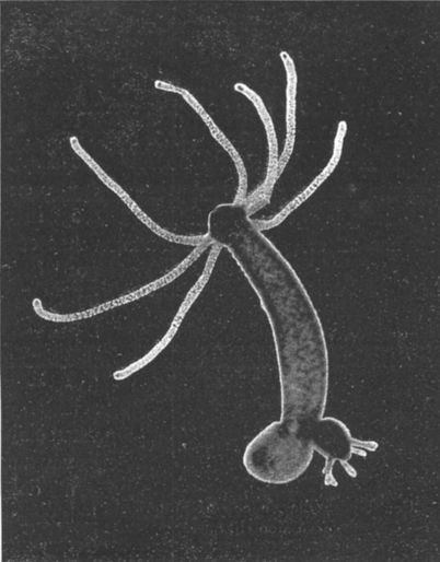 List of longest-living organisms
