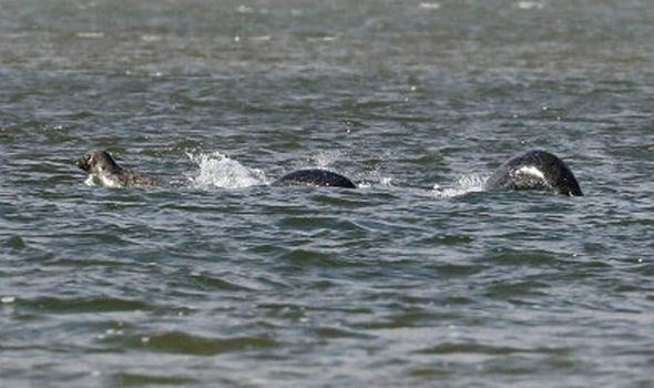 Loch Ness Monster New Loch Ness Monster photos surface UK News Expresscouk