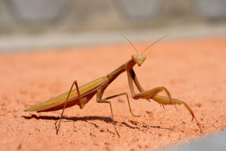 Locust yourshotnationalgeographiccomussfQYSUbVftsT7