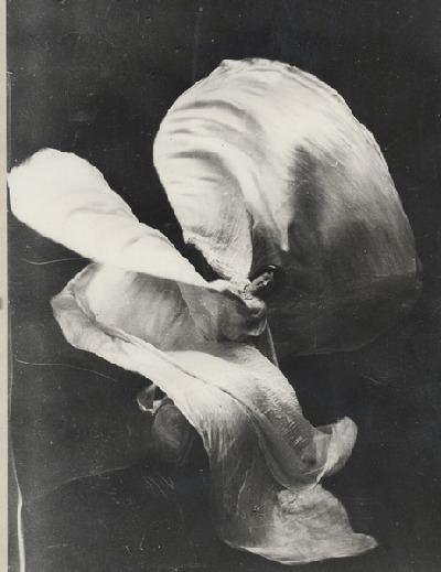 Loie Fuller Invoking the Dance Spirit of Loie Fuller Art Nouveau in