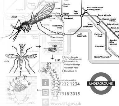 London Underground mosquito Mosquitoes Harmless Nuisance or Threat in the UK EVAQ8 blog