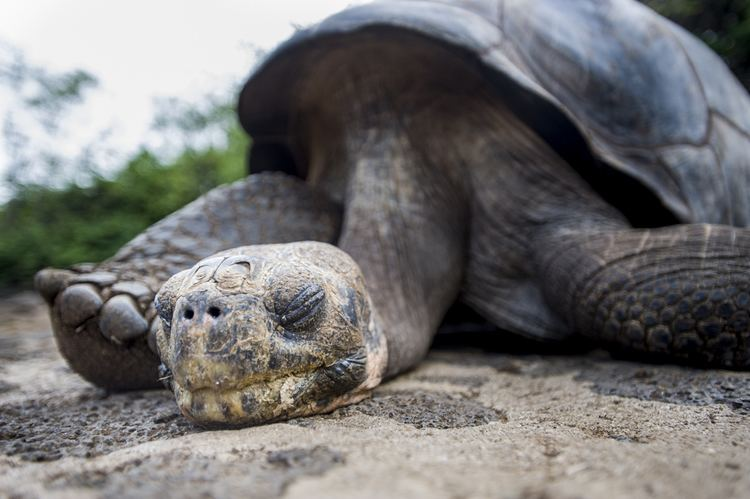 Lonesome George Lonesome George dies top ten things to know about Galapagos