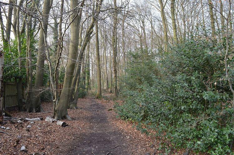 Long Grove Wood