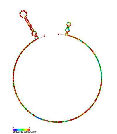Long range pseudoknots