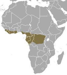 Long-tailed pangolin httpsuploadwikimediaorgwikipediacommonsthu