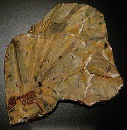Longisquama Longisquama Wikipedia