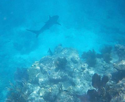 Looe Key Snorkeling Looe Key Reef It39s Deep But Has Big Fish