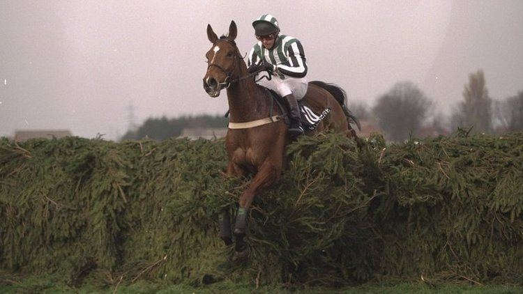 Lord Gyllene Lord Gyllene winner of the 1997 Aintree Grand National has died
