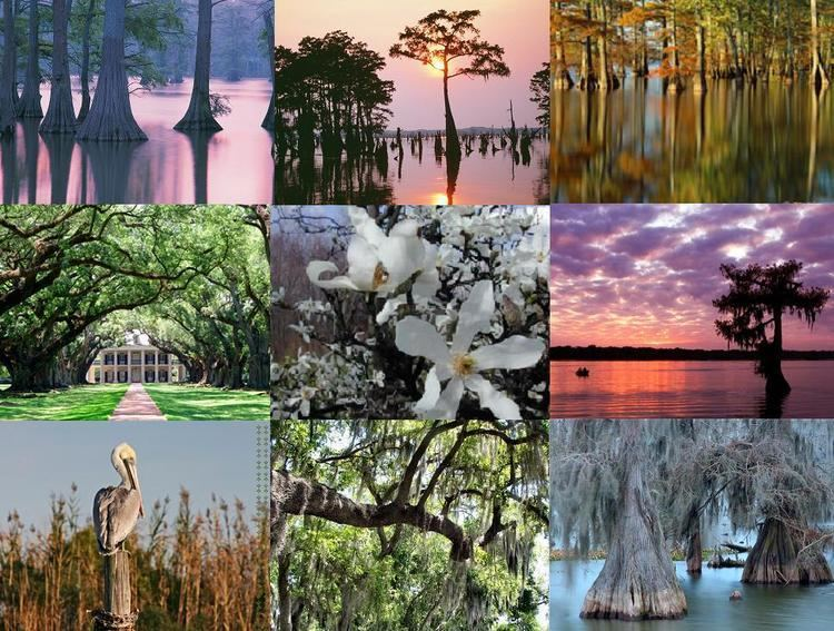 Louisiana Culture of Louisiana