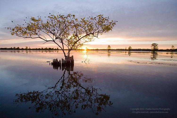 Louisiana Beautiful Landscapes of Louisiana