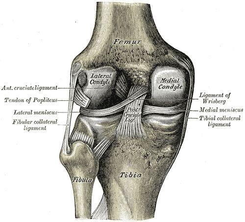 Lower extremity of femur