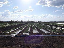 Lower Tenthill, Queensland httpsuploadwikimediaorgwikipediacommonsthu