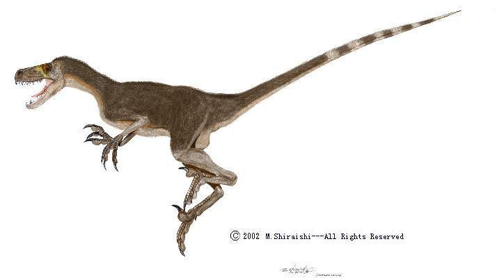 Luanchuanraptor Luanchuanraptor quotrunning lizardquot Dinosauricon D Dromaeosauridae
