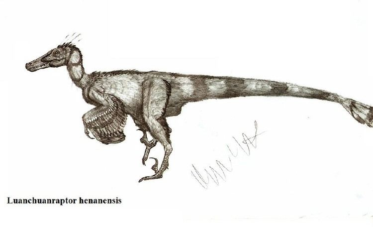 Luanchuanraptor Luanchuanraptor Pictures amp Facts The Dinosaur Database