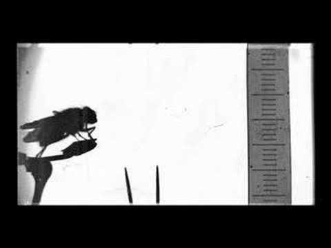 Lucien Bull Lucien Bull stenographics 2 YouTube