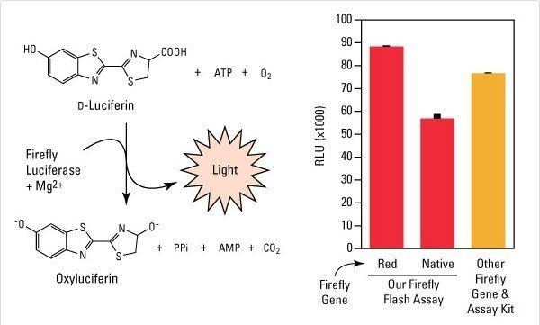 Luciferin Pierce DLuciferin Monosodium Salt Thermo Fisher Scientific