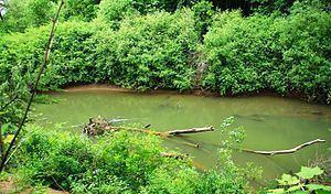 Luckiamute River httpsuploadwikimediaorgwikipediacommonsthu