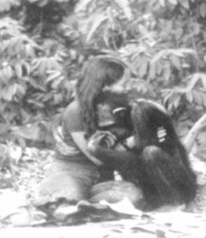 Lucy (chimpanzee) httpsuploadwikimediaorgwikipediaen774Luc