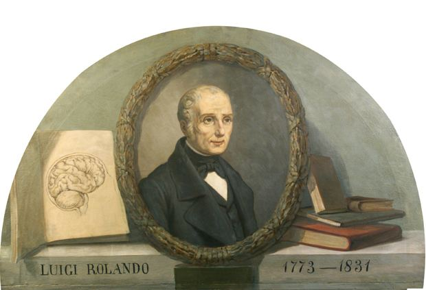 Luigi Rolando