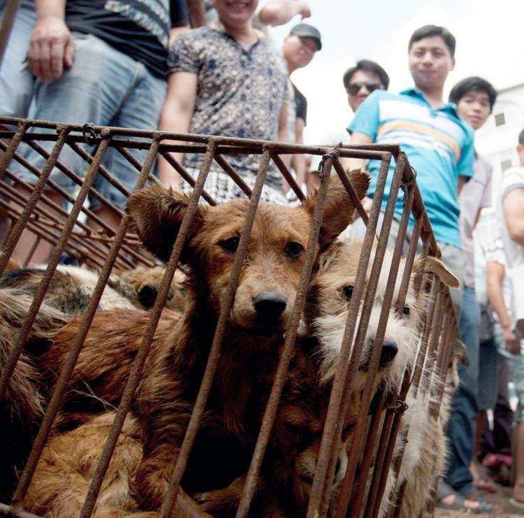 Lychee and Dog Meat Festival - Alchetron, the free social encyclopedia