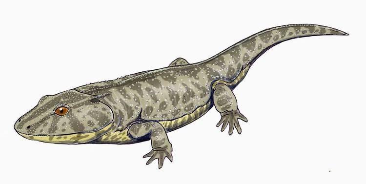 Lydekkerinidae
