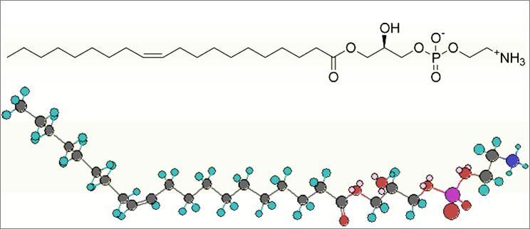 Lysophosphatidylethanolamine