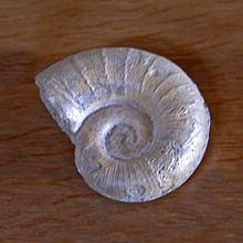 Lytoceras eudesianum httpsuploadwikimediaorgwikipediacommonsthu