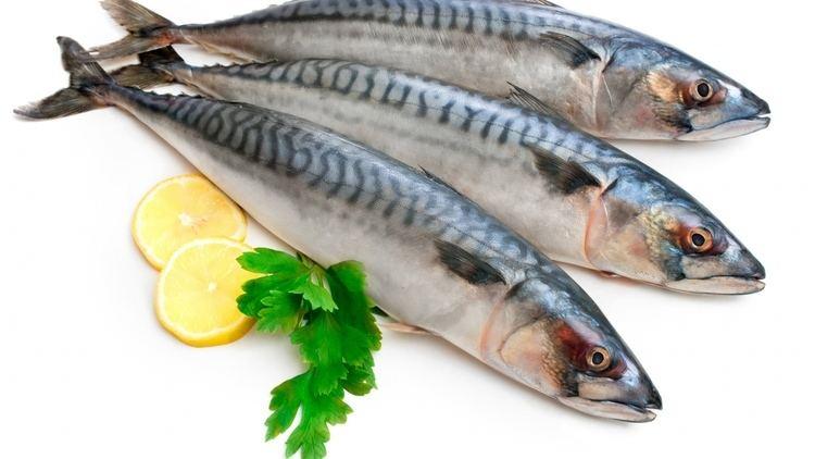 Mackerel Useful properties of mackerel