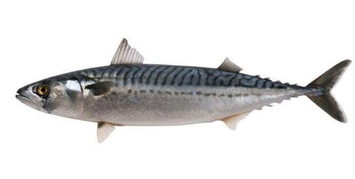 Mackerel The Nutrition of Mackerel Nutrition Healthy Eating