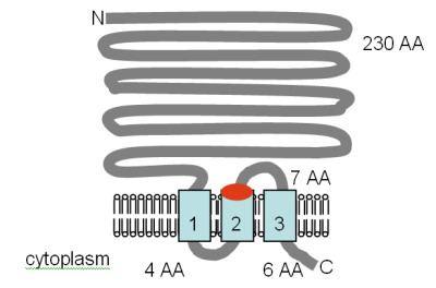 Magnesium transporter
