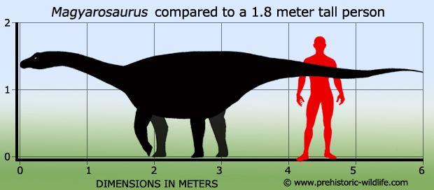 Magyarosaurus wwwprehistoricwildlifecomimagesspeciesmmagy