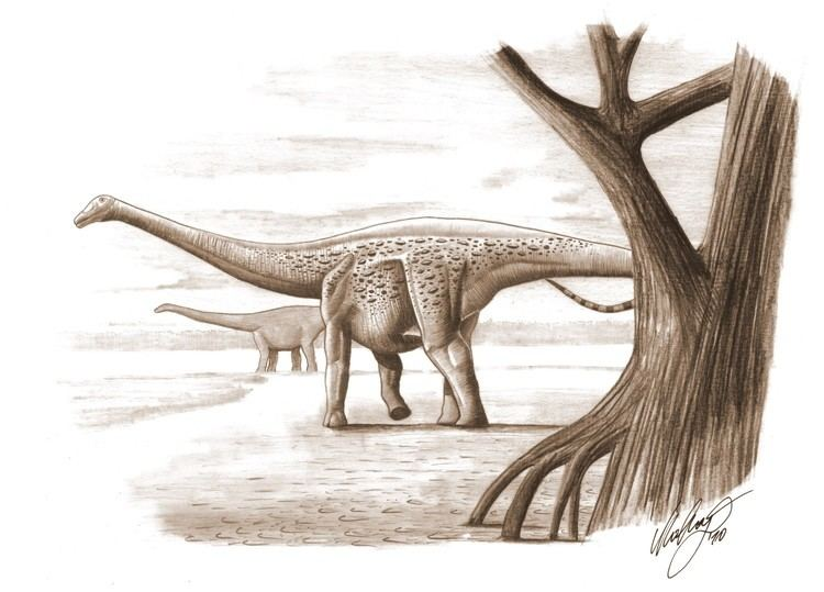 Magyarosaurus Magyarosaurus Dacus A Sauropod Dwarf Study Finds Science 20