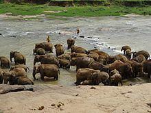 Maha Oya httpsuploadwikimediaorgwikipediacommonsthu